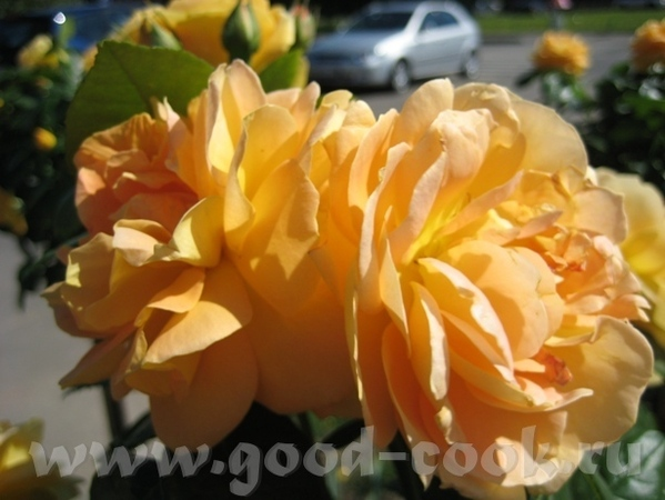 Покажу вам ещё немного цветов рядом со своим домом - 6