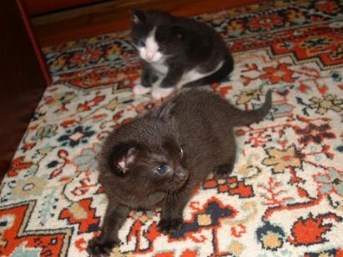 Недавно выяснилось, что это кошка, причём беременная - 3