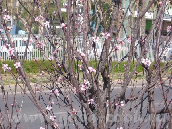 А это несколько фотографий с марта месяца: - 3