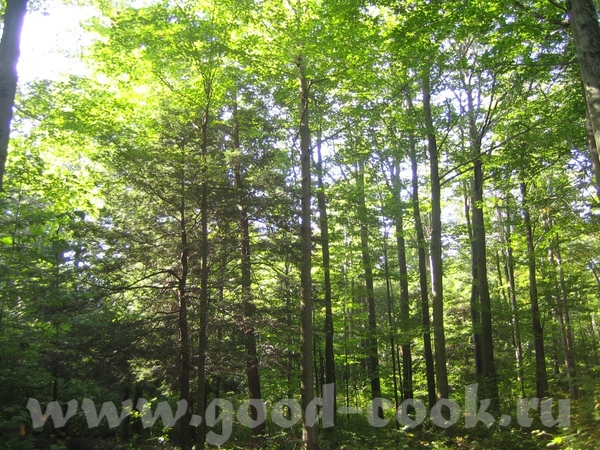 У наших друзей там дом с большим участком земли прямо в лесу - 2