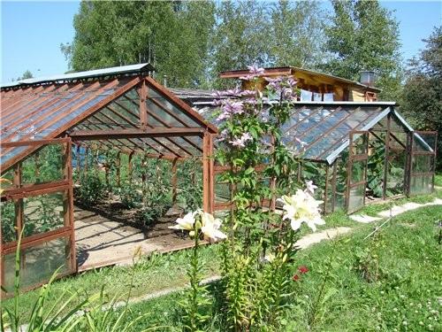 """Это - наши теплицы в них растут огурцы и вечнозеленые помидоры Это - """"Дом-кухня-столовая"""" или """"Баби..."""
