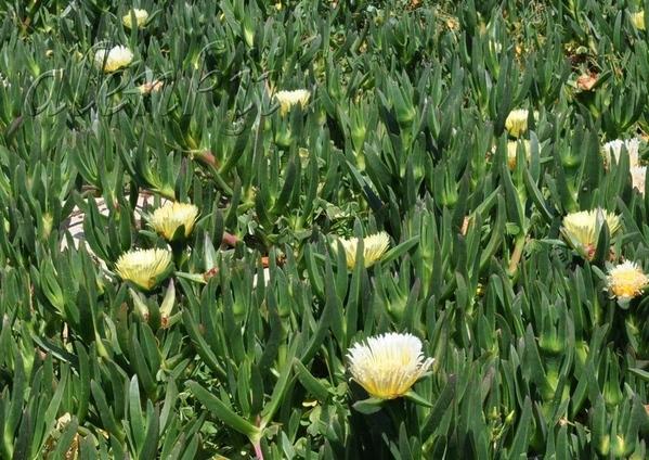 Пальмахим – красивейшее место с видом на море