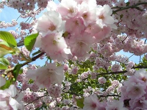 Весна, наконец-то