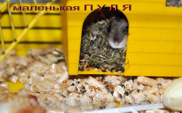 Наташенька поздравляю с Новым Домиком