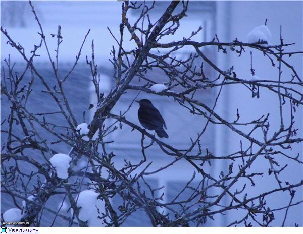 птички первая фотка