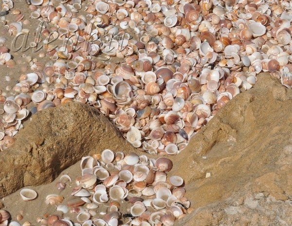 Медленно бредем по мягкому морскому песку