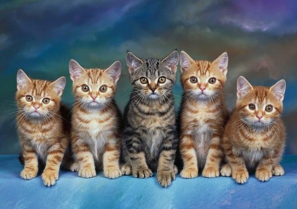Кому кошки нужны Кошкин форум - 10