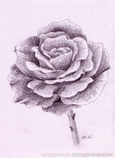Мне во второй картинке понравилось как мистически прерывается стебель розы и исчезает ножка бокала - 4
