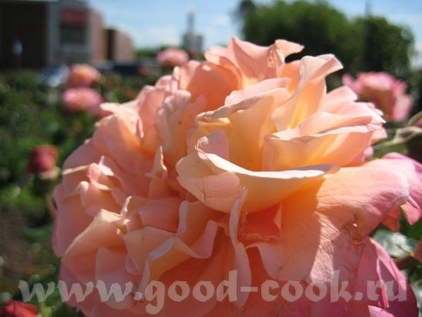 Покажу вам ещё немного цветов рядом со своим домом - 7