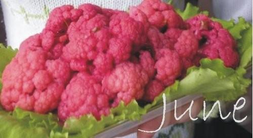 Маринованная капуста: очень красиво получается цветная капуста, но можно и обычную белокочанную.