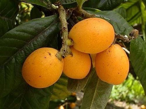 а на фото с клубникой, что за фруктина такая, желта Светик, приветик