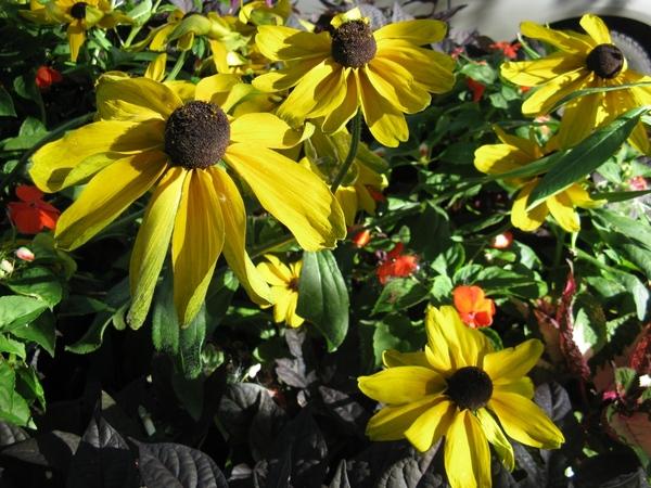 Принесла пару фото с выходных, уже видно начало осени, но пока тепло и солнечно - 4