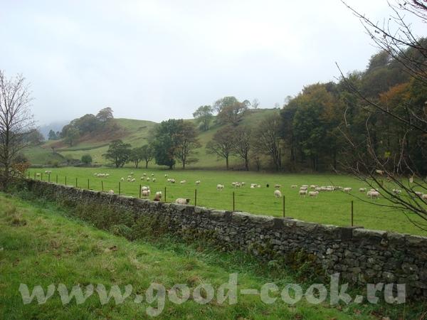 и овцы, овцы