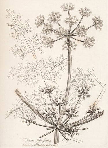 Танечка, сразу скажу, что семян нигеля у меня не было, но в книге ета специя описывается, как арома... - 3