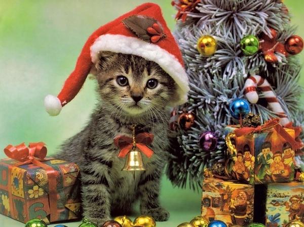 Кому кошки нужны Кошкин форум