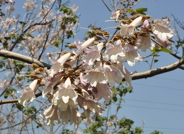 ДИКИЙ ПЛЯЖ ПАЛЬМАХИМ И снова апрель… Так совпало,что именно в середине весны,пока еще не жарко,мы п... - 2