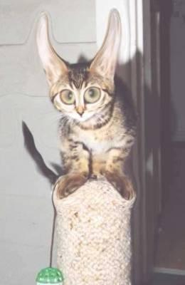 Для любителей котов и кошек - 2