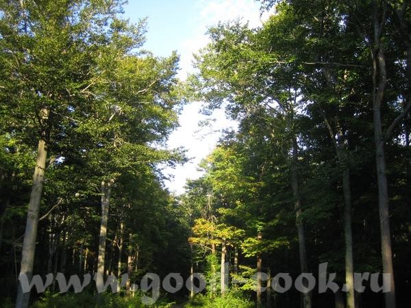 У наших друзей там дом с большим участком земли прямо в лесу - 3
