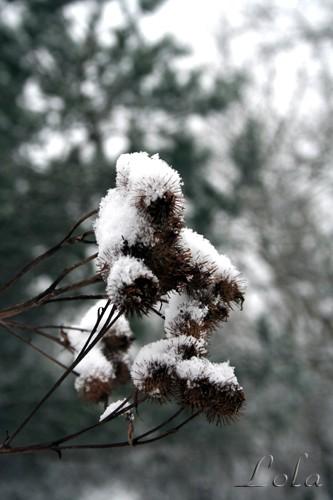 В Москве наступила зима - 3
