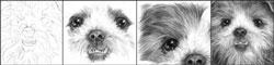 Уроки по рисованию Уроки рисования карандашом от Бетти Эдвардс Ягода-брусника от Михаила Урок зима... - 3