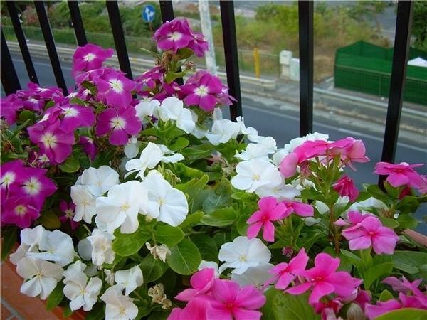 Вид рано утром с балкончика любимого - 3