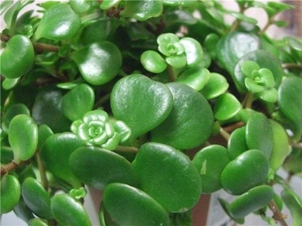 О! Уже 4-ая темка! Здорово! Я недавно купила в ИКЕЕ маленькое растение. На этикетке написано, что э... - 2