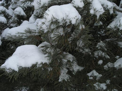 Очень красивые фотографии, а я вам кусочек зимы принесла
