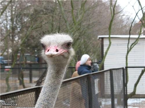 А рядом мини-зоопарк имени Чебурашки - бесплатный - 5