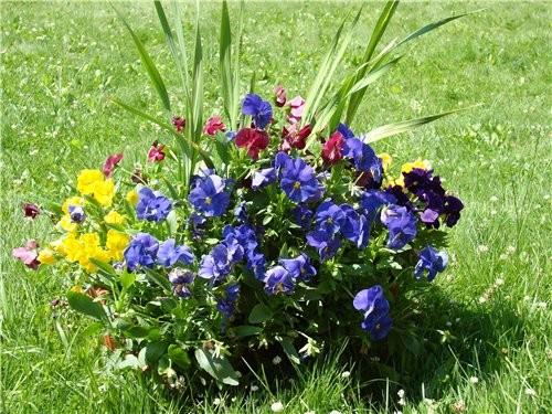 Я в этом году высадила много маленьких цветов не в землю, а в большие горшки: (дочка прячется) горш... - 2