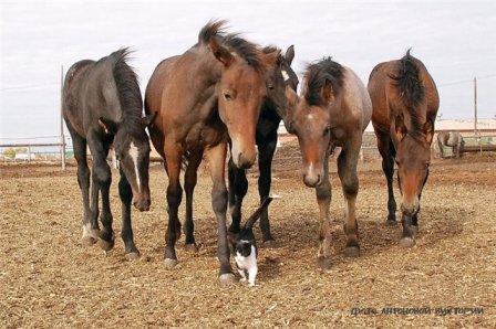 Для любителей лошадей и кошек - 3