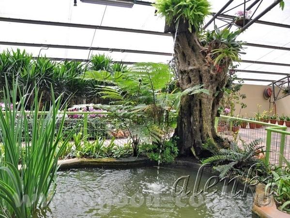 В парке можно прогуляться между скалами и водопадами, предающими парку тропическую атмосферу
