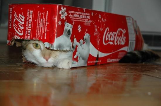 Лизка охраняет новогодние подарки А тут видать пытается куда-то отправиться в своеобразном паровози... - 2