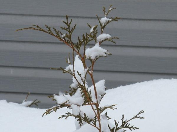 птичка неизвестной породы Зимние виды их окна - 4
