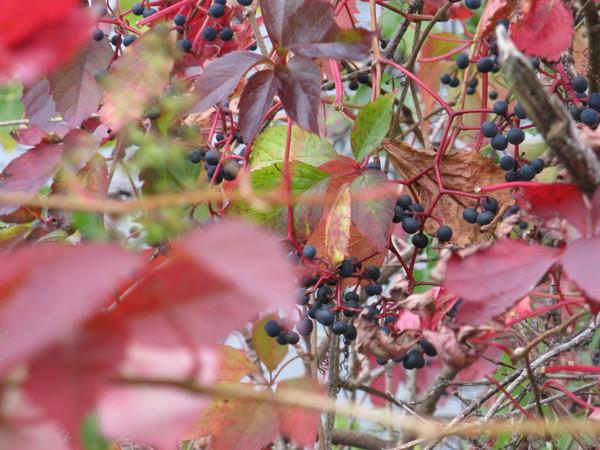 плоды осени белка паук улитки - 3