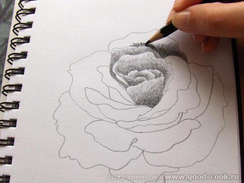 Мне во второй картинке понравилось как мистически прерывается стебель розы и исчезает ножка бокала - 2