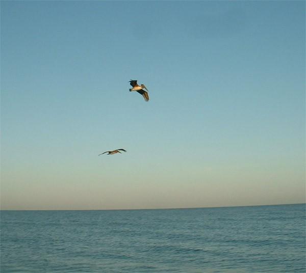 Только успели сбегать на пляж искупаться и съездить в магазин за едой - приезжают наши друзья - 2