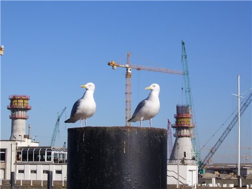 В один из выходных дней мы поехали к Северному морю в город Oostende - 3