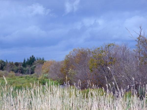 а я ездила на рыбалку на карасей в район Новой Ладоги под Питером, увидела в бинокль цаплю, попытал...
