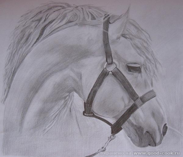 И снова лошадь