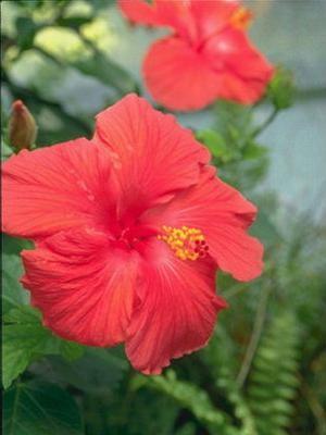 МОА, Пусть в этот день и солнце светит ярче, Цветы под ноги падают ковром