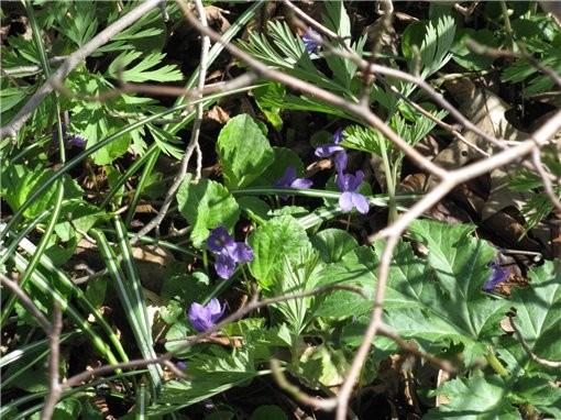 весна пришла и к нам, первые цветущие деревья и цветы в ботаническом саду, запахи стоят я вам скажу... - 8