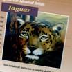 Веа Кокс (Боб Росс), Панда Ягуар Файлы с третьего диска Светика - пейзаж и очень много пояснен... - 2