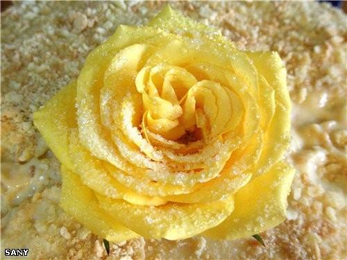 """А на сладкое был """"НАПОЛЕОН"""" а это роза с торта - 3"""