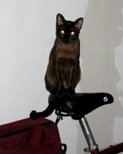велосИпедист юный Велосипед в кладовке, отсюда такие стены, уж извините А это кот смотрит на лампоч...