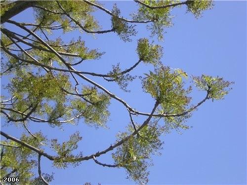 Сегодня увидела -вот дерево распустилось, такие висюльки оригинальные