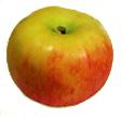 ЛЕТНИЕ СОРТА МЕЛБА (ЛАЗУРНОЕ) Плоды округлой или округло-конической формы слабо-ребристые