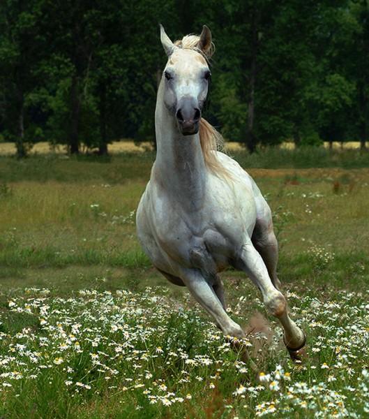 кому лошадок - 4