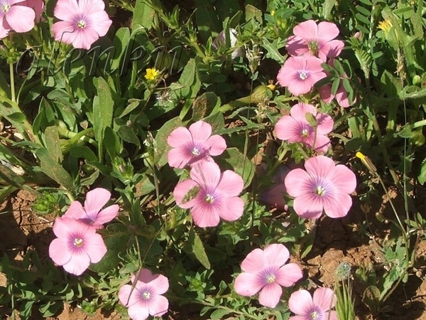 Весна у нас короткая и недолго балует нас свежестью воздуха и приятной прохладой - 6