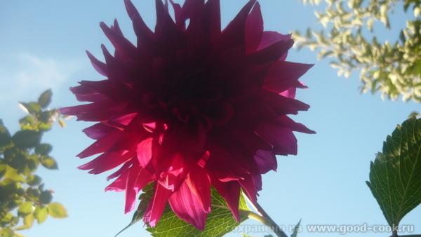 Осеннии краски у меня в саду - 4