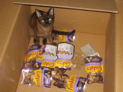 """Вот наш кот, по словам мужа, фотка называется """"в сказку попал"""""""